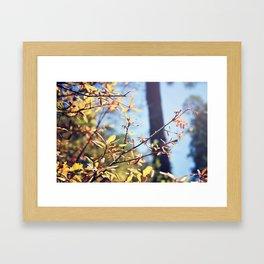 SPRING OAK Framed Art Print