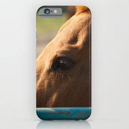 Paddock 6 Animal / Horse Photograph iPhone Case