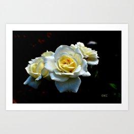 Tria Alba Rosae Art Print