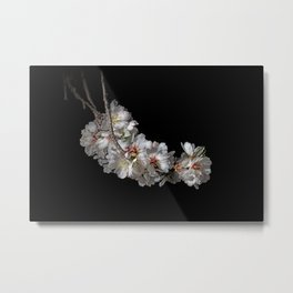 Almond blossoms -2 Metal Print