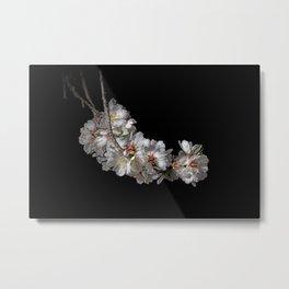 Almond blossoms -2 Metal Print