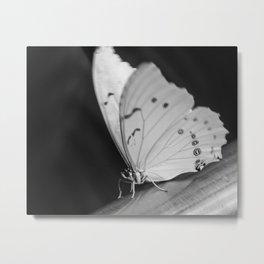Papillon B/W Metal Print