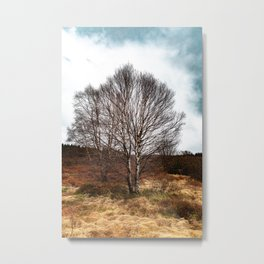 The birch without leaves. Metal Print