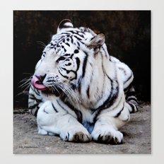 Tiger Tongue Canvas Print