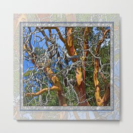 MADRONA TREE DEAD OR ALIVE Metal Print