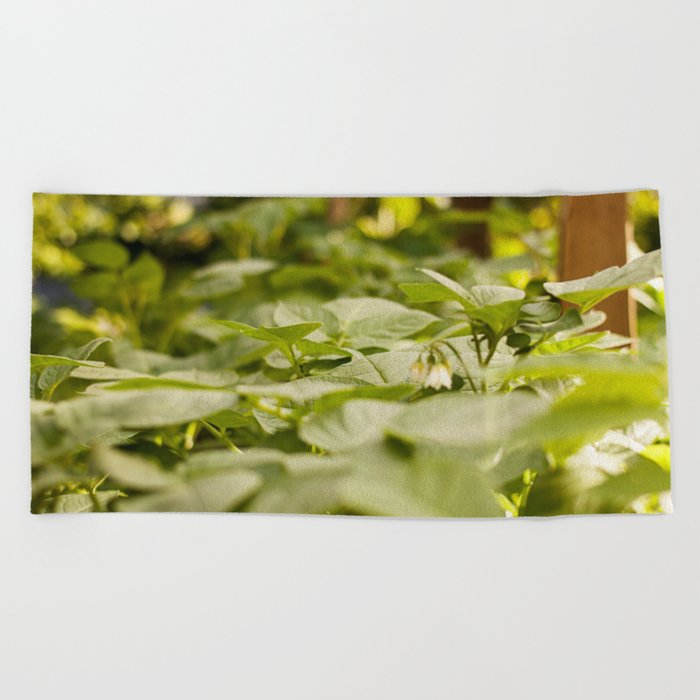 Potato Plants Photography Printpotato Print Beach Towel By Griffingphotography Society6