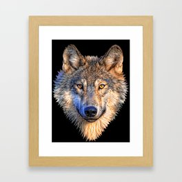 Midnight Wolf Framed Art Print