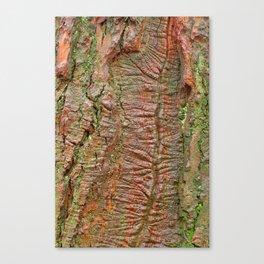 Mossy Wood Rifts Canvas Print