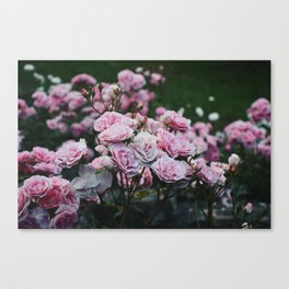 Rose Garden at Dusk Canvas Print
