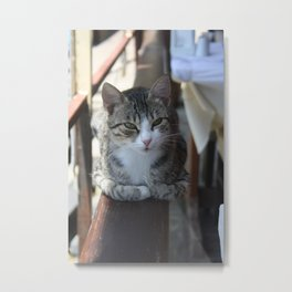 Cute Tabby Cat - Sitting On The Fence Metal Print