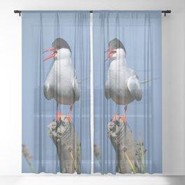 Arctic Tern Sheer Curtain