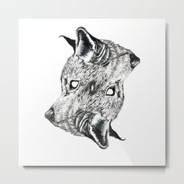 Canis latrans Metal Print