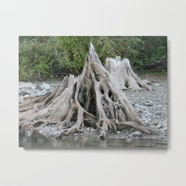 """""""Aspire to New Heights.""""  (The root that wouldn't die.)  Nature Series #2. Metal Print"""