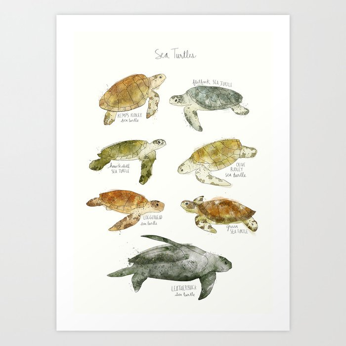 Discover the motif SEA TURTLES by Amy Hamilton as a print at TOPPOSTER