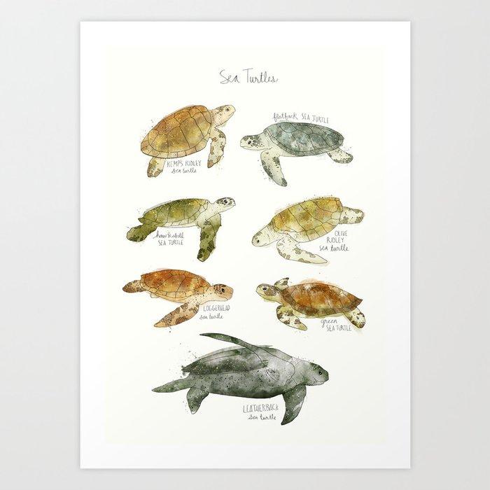 Découvrez le motif SEA TURTLES par Amy Hamilton en affiche chez TOPPOSTER