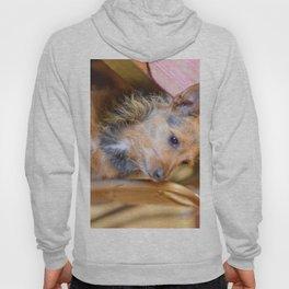 Aussie Hoody