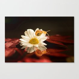 Baby Snail on a flower in the water  Canvas Print