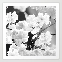 Cherry Tree Flowers in Black and White #decor #society6 #buyart Art Print