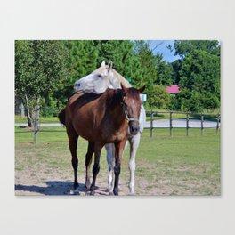 Horse Photobomb Canvas Print