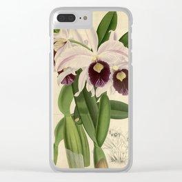 The Orchid Album - Dendrobium Suavissimum Clear iPhone Case