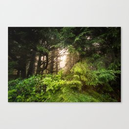 The Light Within - Beauty in the Washington Rain Forest Canvas Print