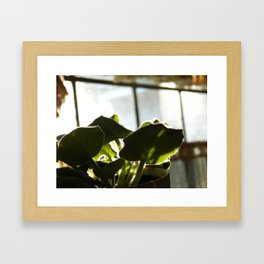 Sprouting Framed Art Print