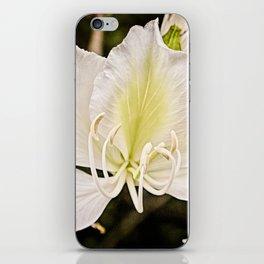 Butterfly tree or Bauhinia variegata iPhone Skin