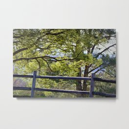 California Forest Landscape by Reay of Light Photography Metal Print