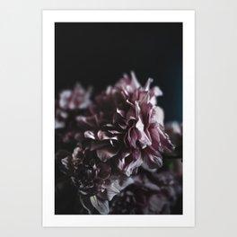 Dahlia in the Dark Art Print