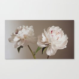 Twin peonies (natural) Canvas Print