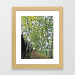 Birch Path Framed Art Print