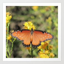 Queen Butterfly on Rubber Rabbitbrush in Claremont CA Art Print
