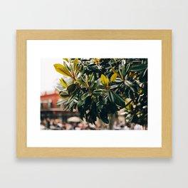 Magnolia Tree in Jackson Square Framed Art Print