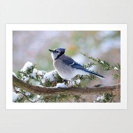 Look Skyward Blue Jay Art Print