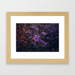 Last Colour's Song Framed Art Print