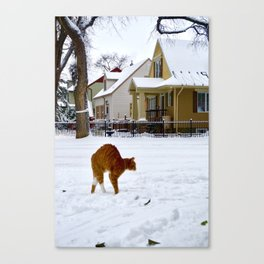 Cat in Winter Spots Dog Canvas Print