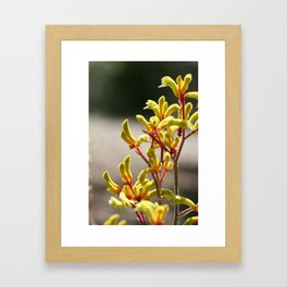 Kangaroo paws Framed Art Print