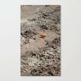 monarch in the desert Canvas Print