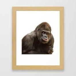 Gorille 6 Framed Art Print