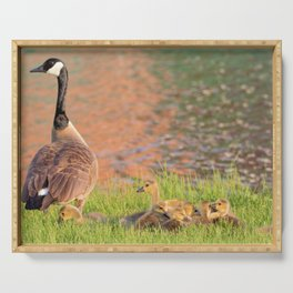 Canadian Goose and Goslings by Reay of Light Serving Tray