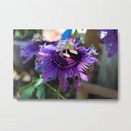 Purple Passiflora Metal Print