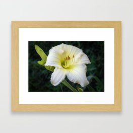 Beautiful Daylily Framed Art Print