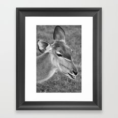 Zoo series no.2 Framed Art Print