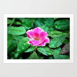 Pink Flower in the Rain Art Print