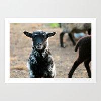 lamb Art Prints featuring Lamb by hyycam