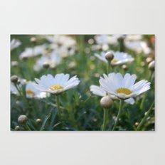 Fresh morning 0797 Canvas Print