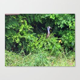 Is It Over Yet? Canvas Print