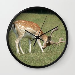 deer, roe deer, Wall Clock