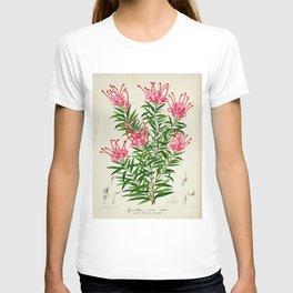 Grevillea Rosea Vintage Botanical Floral Flower Plant Scientific Illustration T-shirt