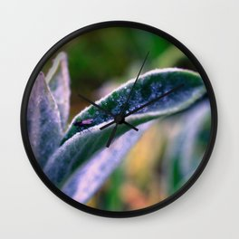 fly on Stachys leaf Photography - Nature - Garden - Plant  Wall Clock